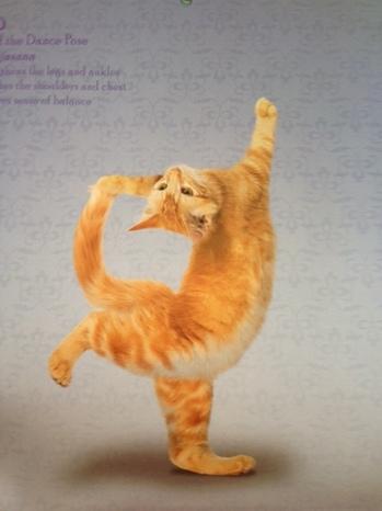 yogacat4.jpg