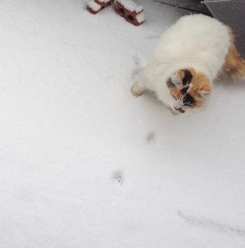 雪の日のマリア.jpg
